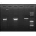 Набір реагентів  для швидкого виділення ДНК з  агарозних гелей NeoPrep Elution DNA