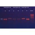 Neo-Gene_5-HTR2A  T102C