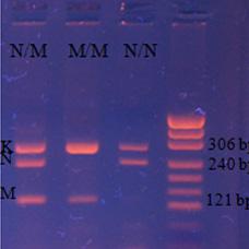 Neo-Gene_F5  G1691A (Лейден)